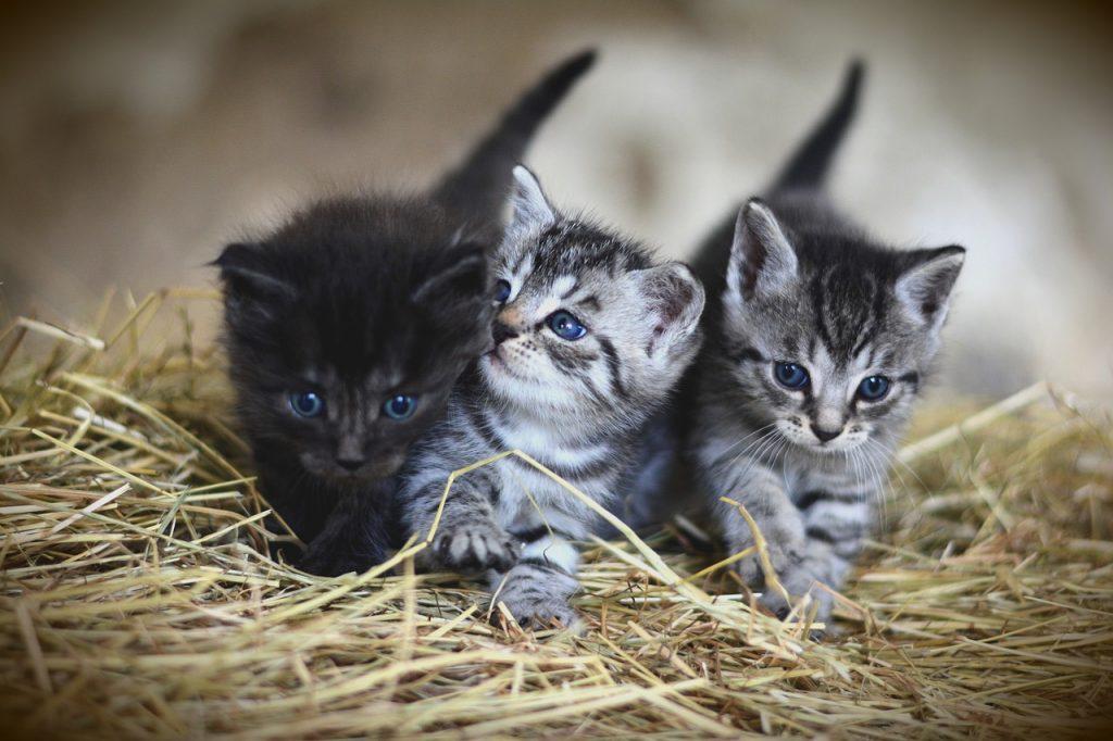 猫を飼いたいあなたへ!メリット・デメリットを徹底紹介!