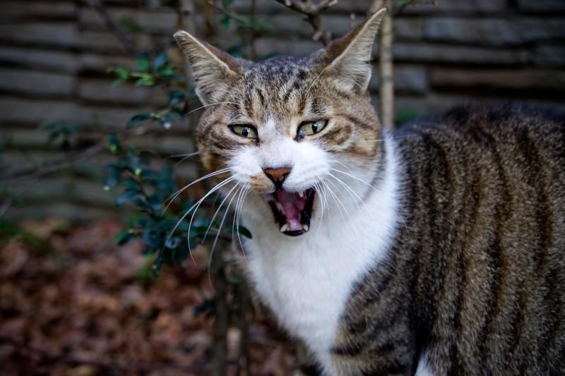 噛み癖…爪とぎ…猫のしつけはできるだけ早い時期に!