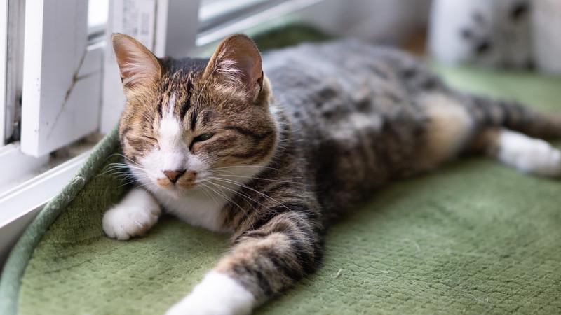 猫の性格が今までと違う!?避妊・去勢手術をした後の変化に注意!