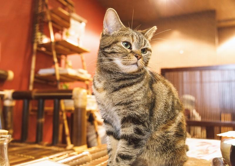 【ツンデレ】猫と仲良くなりたいなら距離を置け!【ねこのきもち】