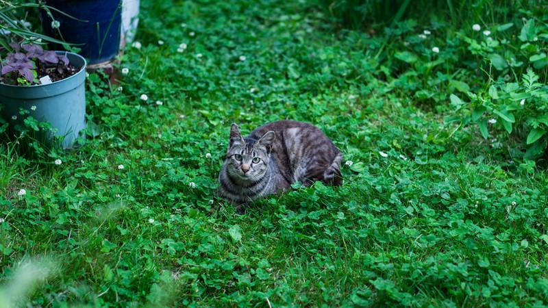 庭を散歩中の猫