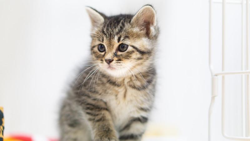 しつけ次第で猫が変わる!おすわり・お手などの芸も余裕!【子猫・成猫OK】