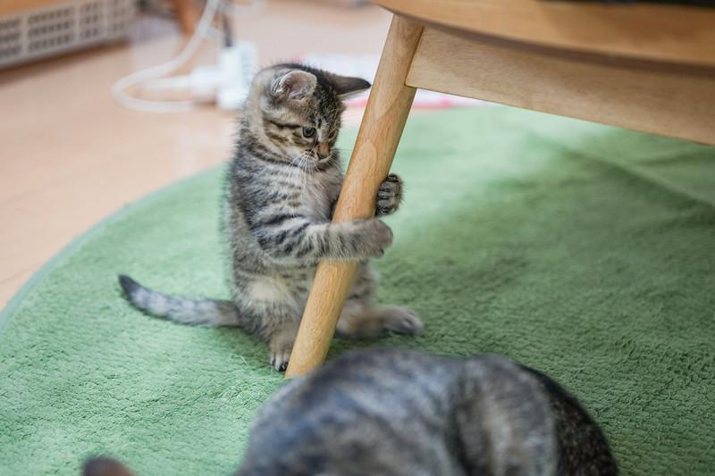 料金は?システムは?初心者でも1人でも安心の猫カフェガイド